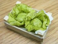 Lettuces in wood box - F147H